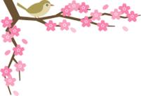 桜と目白.png